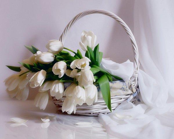 Белые тюльпаны.jpg
