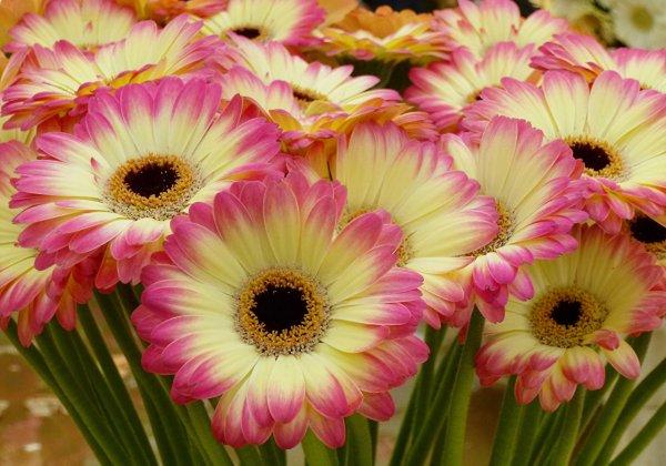 цве.jpg